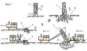 Способы расчистки стройплощадки от деревьев и пней